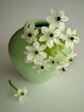 Still Life Photograph, a Green Vase with Ornithogalum Flowers Photographic Print by Abdul Kadir Audah