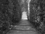 Path with Shrubs at the Boboli Gardens in Florence, Italy Photographic Print by Andrea Sperling