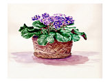 Purple African Violet in Basket Giclee Print by Rich LaPenna