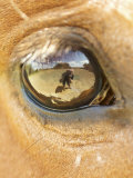 Horse Eye Photographic Print by April Bauknight