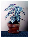 Plant in Pot on Blue Floor Giclee Print by Rich LaPenna