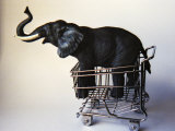Profile Toy Elephant in Toy Supermarket Cart Photographic Print by Winfred Evers