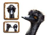 Emu Memories Photographie par Abdul Kadir Audah