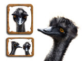 Emu Memories Photographic Print by Abdul Kadir Audah