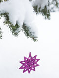 Pink Star Christmas Ornament Hanging Off Pine Branch in Forest, Saratoga Springs New York Photographic Print by Laura Johansen