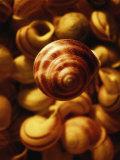 Cluster of Seashells Photographic Print by Abdul Kadir Audah
