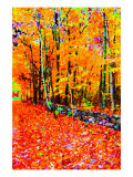 Forest in Autumn Lámina giclée por Rich LaPenna