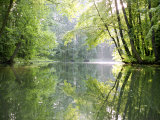 Spreewald Canal Reflection, an Area of Old Canals in Woods Papier Photo par Diane Miller