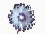 Irridescent Flower Photographic Print by Ade Groom