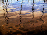 Reflections of Boat Masts in a Lake Photographic Print by Claire Morgan