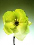 Green Magnolia Blossom Fotografie-Druck von  Monzino