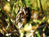 Owl. Sedona, Arizona, USA Photographic Print