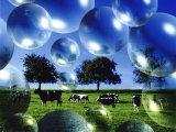 Bubble Pasture, Bergisch Land, Germany Photographic Print by Abdul Kadir Audah