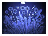 Dandelion Flowers in Moonlight Giclee Print by Emiko Aumann