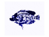Blue Dapple Fish Print Giclee Print by Rich LaPenna