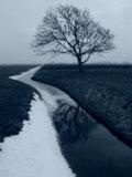 Landscape Photograph, a Winter Scenery in Spanbroek, the Netherlands Fotografisk tryk af Abdul Kadir Audah