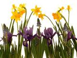 Abdul Kadir Audah - Still Life Photograph, a Collection of Spring Flowers in One Frame - Fotografik Baskı