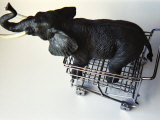 Toy Elephant in Toy Supermarket Cart Photographic Print by Winfred Evers