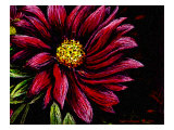 Dahlia Flower in Pastels Giclee Print by Rich LaPenna