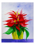 Poinsetta Flower in Pot Giclee Print by Rich LaPenna
