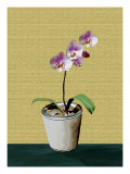 Orchid Plant with Flower in Pot Giclee Print by Rich LaPenna