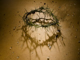 Crown of Thorns with Large Shadow and Pieces of Rock Fotografie-Druck von Joshua Hultquist