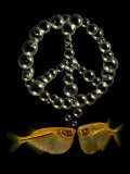 Two Tetra Fish Blowing Peace Symbol Shaped Bubbles Photographic Print by Abdul Kadir Audah