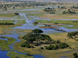 Aerial of African Buffalo Moving Through the Okavango Delta Photographic Print by Beverly Joubert
