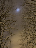 Night Image of Trees Bathed in Artificial Light from City Lights and the Full Moon Photographic Print by John Churchman