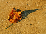 A Fallen Autumn Leaf and it's Shadow Photographic Print by Claire Morgan