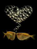 Tetra Fish Blowing Bubbles in Heart Shape Photographie par Abdul Kadir Audah