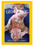 Cover of the October, 1999 Issue of National Geographic Magazine Photographic Print by Karen Kasmauski