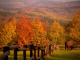 Autumn Scenery with Horses Grazing and Corral, Germany Photographic Print by Abdul Kadir Audah