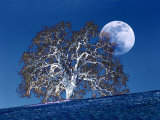 Oak Tree and Moonrise Photographic Print by Diane Miller
