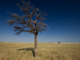 Baobab Tree and the Vast Makgadikgadi Pans Photographic Print by Beverly Joubert