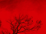Tree Silhouette Against a Red Sky Photographic Print by Rob Lang