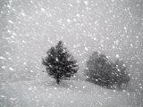 Sudden Snow Flurry Fotografisk tryk af John Churchman