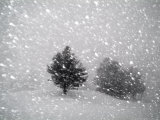 Sudden Snow Flurry Photographic Print by John Churchman
