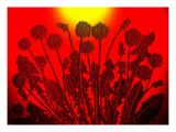 Sunset Dandelions Giclee Print by Emiko Aumann