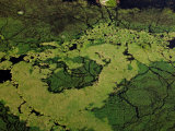 Aerial View of Animal Trails Through the Okavango Delta Photographic Print by Beverly Joubert