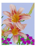 Rlowers, Two Daylilies in a Bed of Carnations Giclee Print by Rich LaPenna