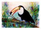 Toucan Sits on Large Branch Giclee Print by Rich LaPenna