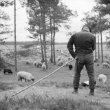 Shepherd with His Sheepdog and His Flock Near Where Van Gogh Lived Photographic Print by Lynn Johnson
