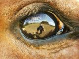 Close-Up of Horse Eye Photographie par April Bauknight