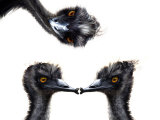 Kissing Emus Photographic Print by Abdul Kadir Audah