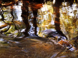 Trees Reflected in Oak Creek, Sedona, Arizona, USA Photographic Print by Margaret L. Jackson