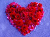 Roses Form Heart Shape on Blue Background Photographie par Emiko Aumann