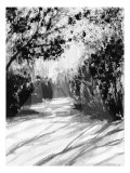 Trees and Shadows on Sand Giclee Print by Rich LaPenna