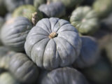 Squash Photographic Print by Diane Miller