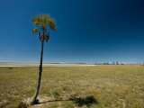 Palm Tree and Pond on the Makgadikgadi Pans Photographic Print by Beverly Joubert